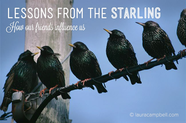 Lessons from the Starlings: How Our Friends Influence Us